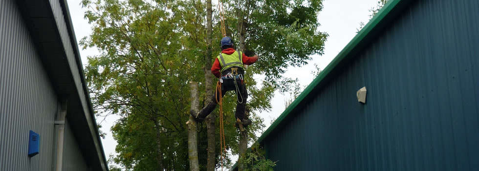 Tree pruning and felling in tricky spaces